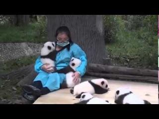 The world's best job  Wanna be a panda hugger - Funny Videos