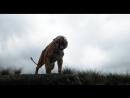 Книга джунглей | The Jungle Book | rybuf leyuktq