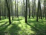 Релакс.Звуки природы : Летний лес,слушать перед сном,.Relax, nature sounds