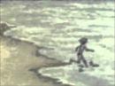 Дубовый ГаайЪ Dolphin Мишины дельфины