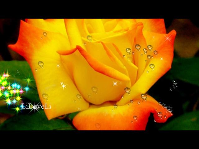 Ron Asprey - I Will Always Love You :)