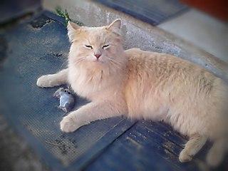 Немного о кормежке кошек: кто кого кормит?