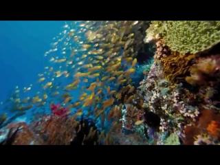 Подводный мир - красота красок