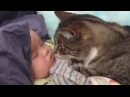 Кошка целует спящего ребенка