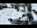 Дикая Антарктика   Wild Antarctica 2015   Мир Животных   Документальные фильмы   Документальные филь