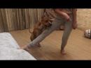 Трюк Прыжок - шаг№1 - невысоко фиксируем ногу на любой поверхности, команда Прыжок, лакомство.