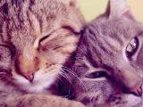ТОП 10 очень смешных кошек! Они такие милые)