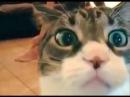 Смешное видео про котов 2015. Смешные коты