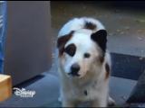 собака точка ком 3 сезон 8 серия