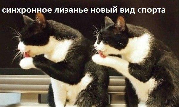 https://pp.vk.me/c629400/v629400981/3e4d6/KuzHGlFYkog.jpg