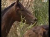 Документальный фильм Всадники. Испанская конная ультура