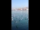 Цемеская бухта