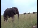 Кения-ещё один слон дебил