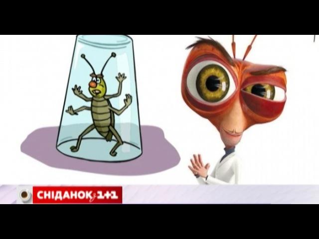 Боротьба з тарганами - Дивитися, - 1plus1.ua