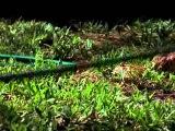 Эти загадочные животные / BBC: Weird Nature2 Devious Defences