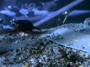 Эти загадочные животные BBC Weird Nature4 Fantastic Feeding