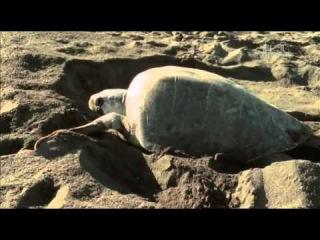 Animal planet. Дикие животные. Миграции.1 серия