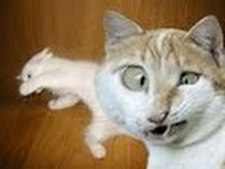 СМЕШНЫЕ ГОВОРЯЩИЕ КОТЫ. Смешные видео с КОШКАМИ. Приколы с животными.