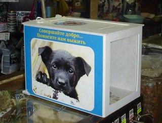 Контакт кот и пес курган