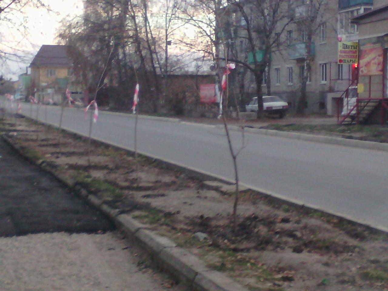 В станице Зеленчукской появилась кленовая «Никитина аллейка»