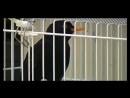 Чёрный дрозд (интересный набор песни)