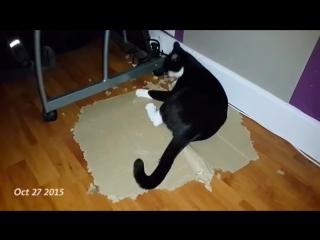 Кот которому нравится уничтожать картонные коробки
