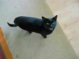 Топ 10 Смешных Видео Про Котов [Low, 360p]