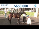 Before They Were Stars: 2YO G1W MOR SPIRIT Sells for $650K at the 2015 F-T Florida Sale