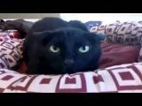 Нарезка приколов с котами! Прикольные котэ. Funny Cats Compilation!