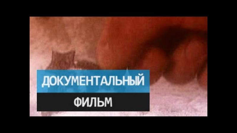 Гибель адмиралов Тайна одной авиакатастрофы Документальный фильм