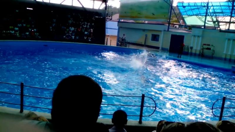 п,небуг дельфинарий