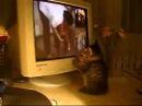Прикольные и смешные коты видео подборка смешные кошки и коты 3.Кот смотрит приколы про котов