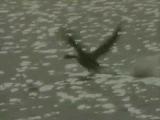 Оберманекен - Птица