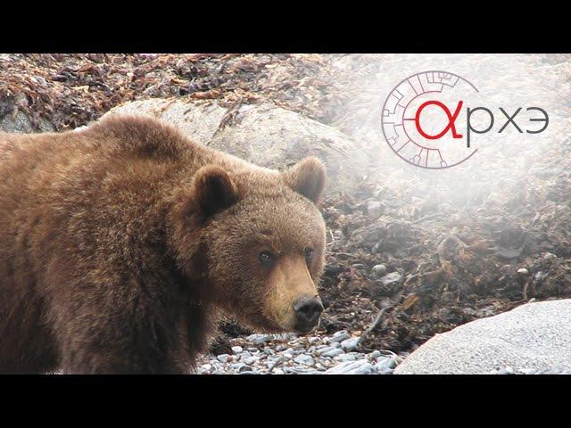 Михаил Кречмар Медведи vs люди