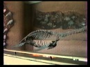 Планета Динозавров. ГТРК ВОЛГА. Ульяновск, 1996