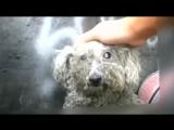 Очень трогательная история спасения слепой собаки по кличке Фиона