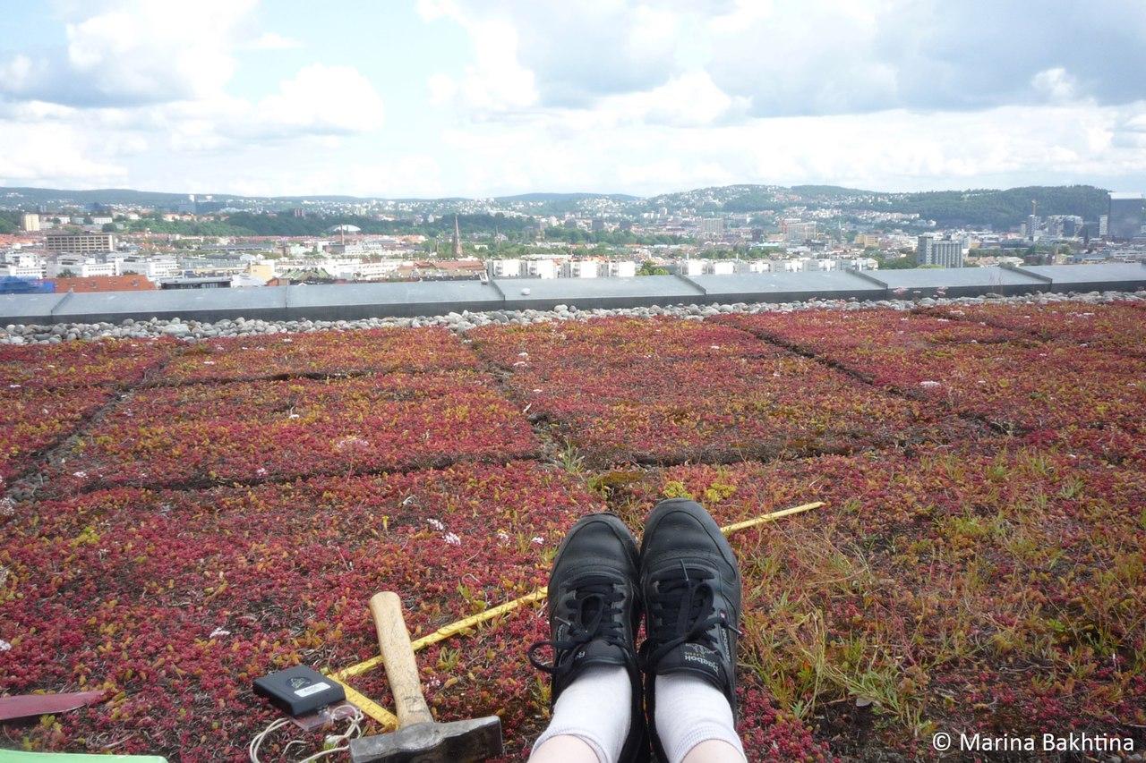 01 Green roof  in Oslo / Lovisenberg diakonalehøgskolen