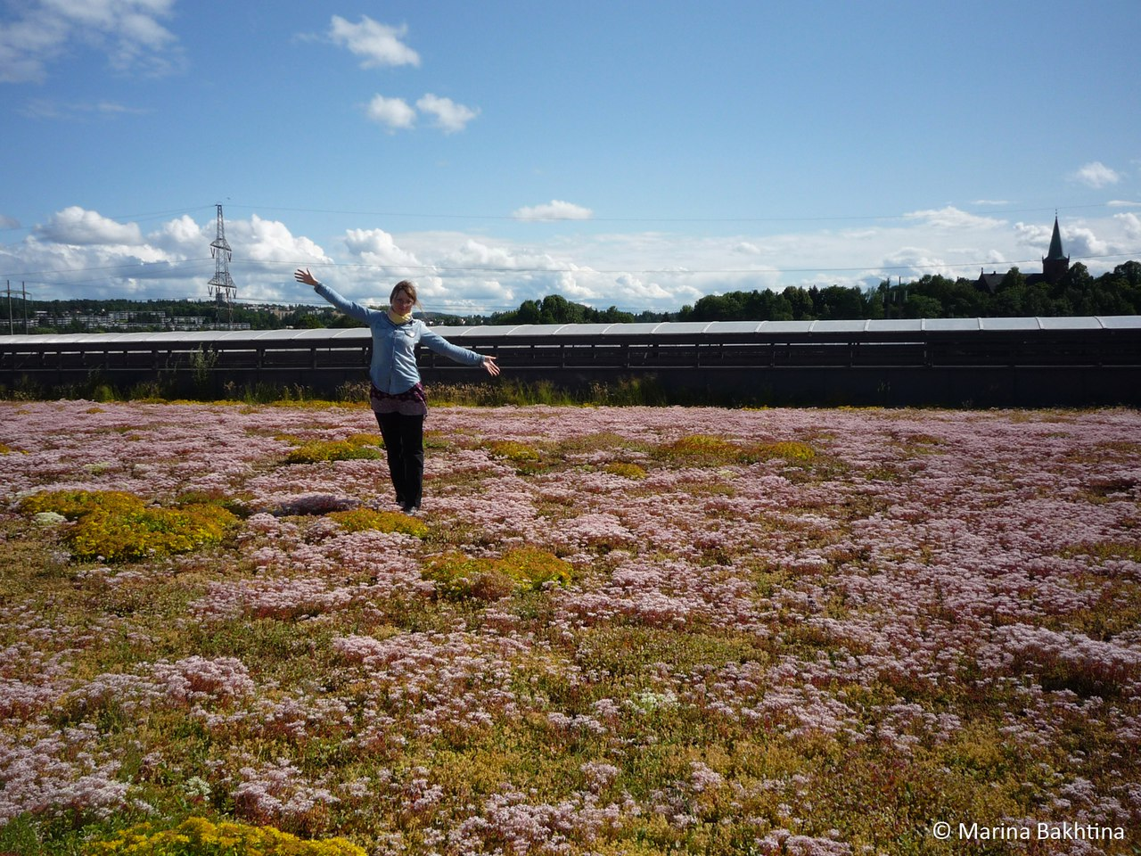 02 Green roof in Oslo / Haraldrud Gjenvinning /Part 1