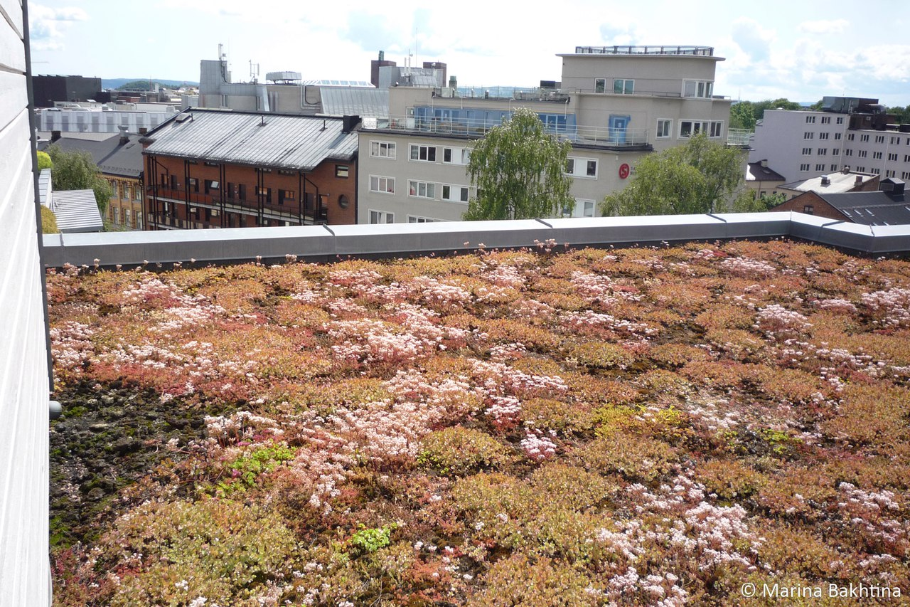 03 Green roof in Oslo / Pilestredet Park 25