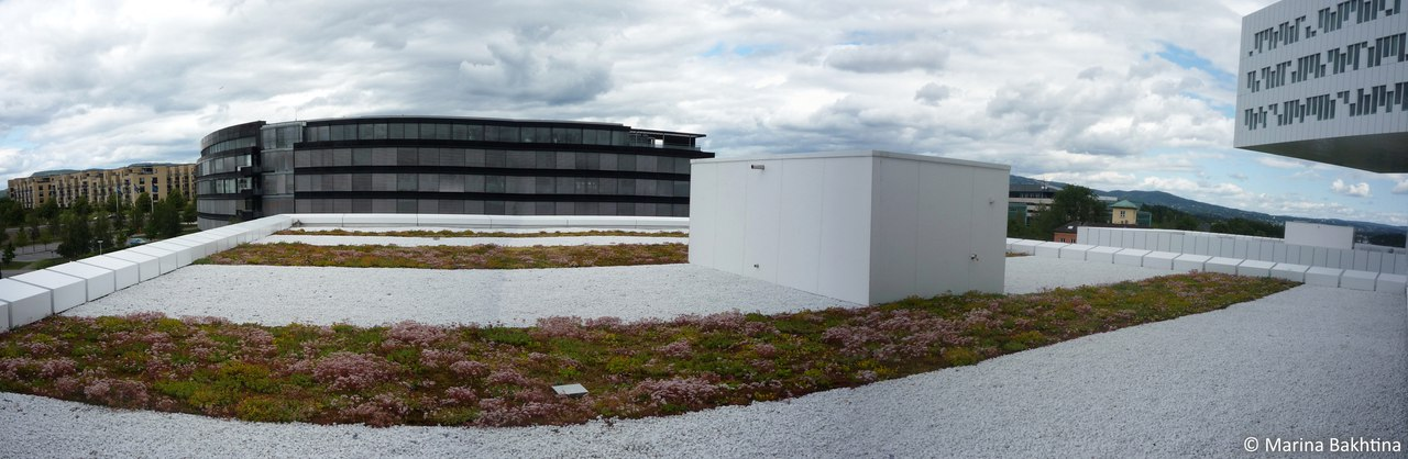 06 Green roof in Oslo / IT Fornebu Inkubator As-Statoil
