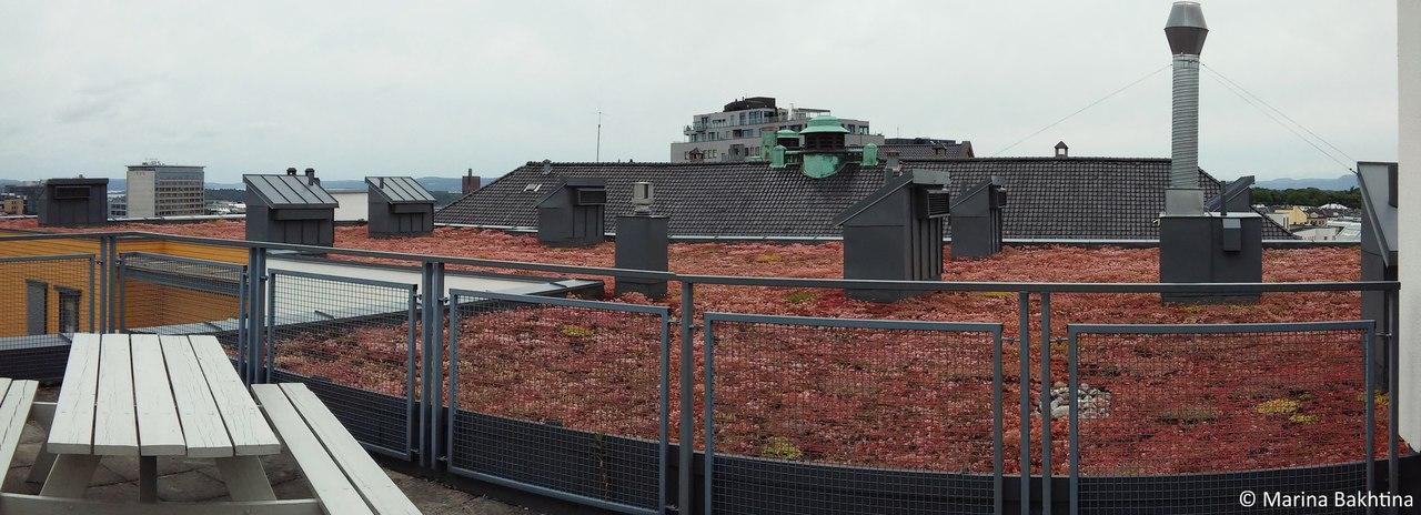 07 Green roof in Oslo / Stensberggata10-14