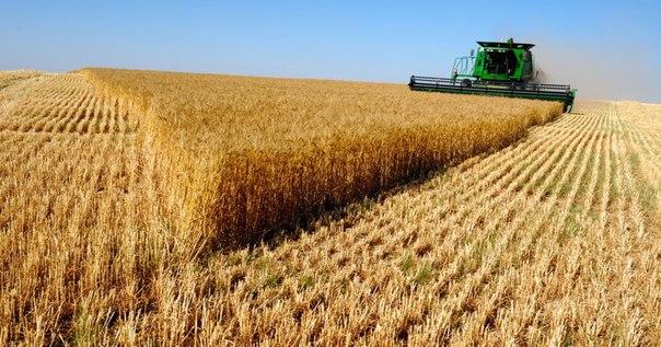 Rusya En Büyük Gıda Satışını Çin'e Gerçekleştirdi