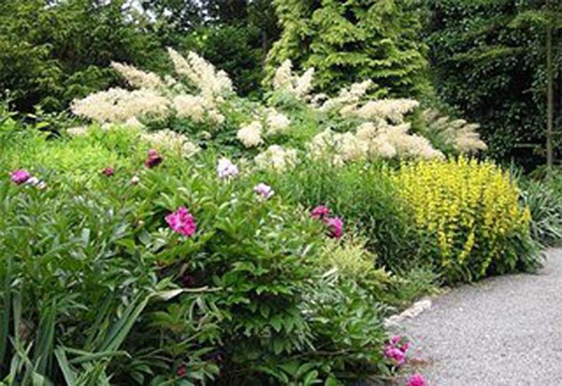 Растения долгожители-волжанка,пион