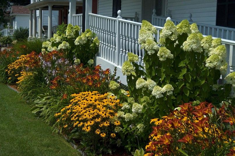 Растения долгожители-лилейник,рудбекия,гортензия, хоста,