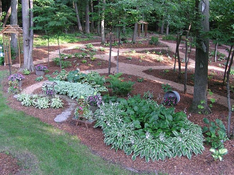 Растения долгожители-хоста