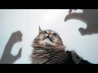 Как пугаются котики-прикольно смешные видео про котов