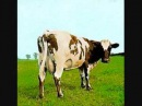 Fat Old Sun - 04 - Atom Heart Mother - Pink Floyd