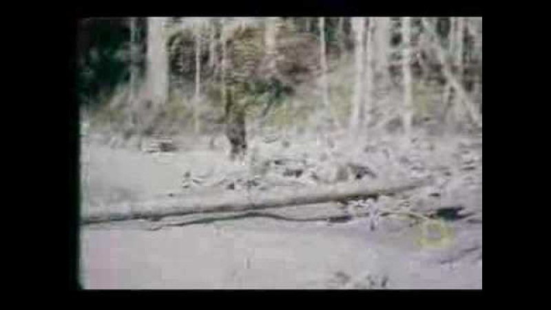 Roger Patterson Bigfoot Footage