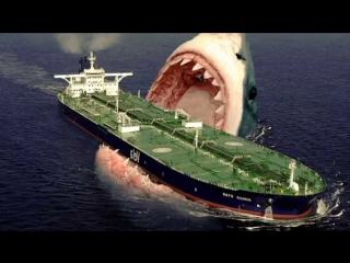 Самая большая акула в мире. Топ 10 фактов