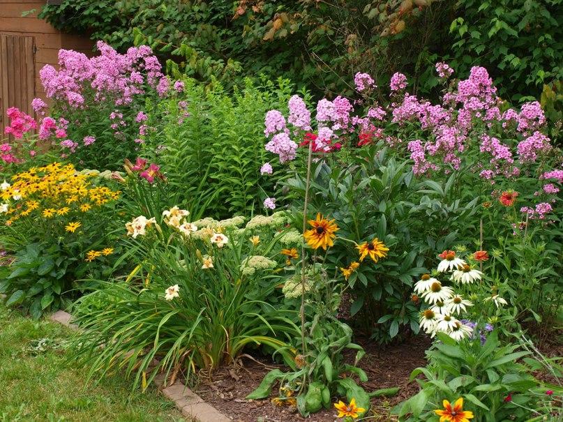 Многолетние цветы и растения